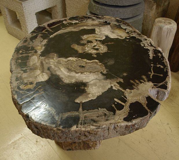 versteinertes holz fossiles holz petrified wood tischplatte scheibe 34 3 kg vh11 ebay. Black Bedroom Furniture Sets. Home Design Ideas